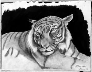 Tiger s